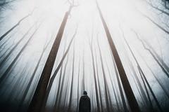 And Then I Woke Up (Nate Bittinger) Tags: shenandoah national park virginia maryland nate bittinger trees fog perspective dark