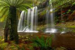 Russel's falls (Elephas_a) Tags: australia hobart mtfield mtfieldnationalpark nationalpark tasmania autumn falls ferns foliagerainforest forest green longexposure movingwater peaceful serene tranquil water waterfall russels