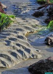 MinusTideSands (mcshots) Tags: usa california socal losangelescounty coast beach lowtide tidepools sealife kelp eelgrass plants seaweed rocks reef ocean sea sand nature travel stock mcshots