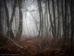 Winter World (Chalky666) Tags: tree trees wood woodland forest common fern silverbirch fog mist gothic enchanted eerie winter painterly landscape art westsussex southdowns rockpaper