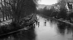 Tübingen im Winter #01 (Gerhard Busch) Tags: bäume eis eisdecke neckar platanenallee spaziergang tübingen winter gefroren