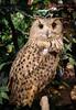 20161231-IMG_5061 (stringer8247) Tags: owl forest harajuku tokyo japan