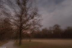 Träumerei (zora_schaf) Tags: nymphenburg träumerei mehrfachbelichtung multiexposure münchen munich tree baum zoraschaf