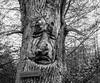 The Monday Face... (Rainer Fritz) Tags: mondayface eicheschnitzereien natur bärenschlössle stuttgart badenwürttemberg deutschland de oaktree