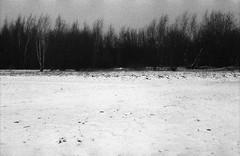 Weiß - Schwarz - Grau (Christian Güttner) Tags: rheinland deutschland tyskland svartvitt niemcy niebo analog natur nrw nature natura film fomapan fomaretropan320 monochrome ricohkr10 ricoh czarnobiale 135 135mm blackandwhite bw landschaft landscapes landscape krajobraz heaven horizont himmel germany drzewo schwarzweis schwarzweisfotografie analogue wald las europa 35mm euregio tree träd umwelt outdoor