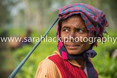 Tea Picker (sarahlack.photography) Tags: indiadecember2015 india travel assam teapicker assamteapicker teaplantation strap headshot portrait femaleworker looking peering peeringbehind lookingbehind lookingovershoulder green vibrant contrast indian