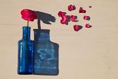 6/52 Flying shadows (Nathalie Le Bris) Tags: fleur ombre stilllife shadow flower pink blue 52of2017 smileonsunday