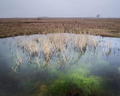 chara pond (Lars L. Iversen) Tags: