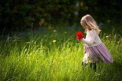 Summer breath (llakstedt) Tags: summer sunlight flower green girl grass childhood kids finland children warm child wind breath sunny 135l canon6d