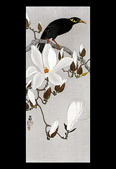 Kobus magnolia and common hill myna (Japanese Flower and Bird Art) Tags: flower bird art japan print japanese hill magnolia ohara common woodblock nihonga kobus religiosa myna magnoliaceae koson sturnidae gracula readercollection