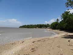 Escenario: Fauna-Ambiente (ecriminao) Tags: costa venezuela playa paisaje arena oriente aire libre 2012 sucre vacaciones2012