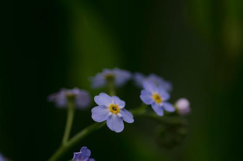 In the woods ©  Still ePsiLoN