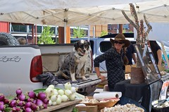 No Dogs Allowed (suenosdeuomi) Tags: new woman dog santafe farmersmarket hund vendor farmer mm fifty50 f18g mexiconikonnikon d5100nifty
