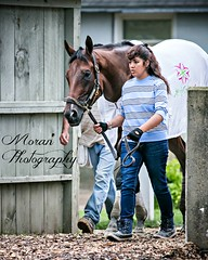 Coach Inge (EASY GOER) Tags: summer vacation horses horse ny newyork sports beauty race canon athletics track saratoga competition upstate running racing course event 5d ponies athletes tradition races sporting spa thoroughbred equine exciting thoroughbreds markiii