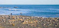237 - Pêcheurs de Turakirae