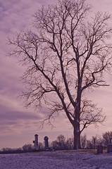 Tall Tree (ramseybuckeye) Tags: supermulticoated takumar 55 18 smc asahi pentax m42 mount lens ohio art life monochrome black white roebuck cemetery frysinger road mercer county rockford