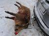 heute gibt es Wildschwein (Werner Schnell Images (2.stream)) Tags: ws wildschwein jäger winter jagd pkw rednoseday