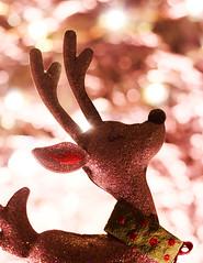 reindeer1 (goodfella1907) Tags: christmas xmas reindeer canon objects festive 700d eos bokeh light winter animals stilllife december holidays beginner amateur creative