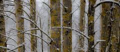 winter forest (sami kuosmanen) Tags: suomi finland forest taivas tree talvi trees winter white wood puu photography tie kuusankoski kouvola koivu birch bokeh luonto light landscape lumi colorful