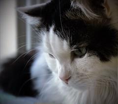 IMG_0330 (ornella sartore) Tags: gatti natura colori particolari