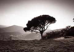 Silueta (grego.es) Tags: 2015 a700 aracena carlzeiss1680 huelva sonyalpha cascadas castaños flores hojassecas noviembre otoño rocío senderismo sierra wwwgregoes árboles