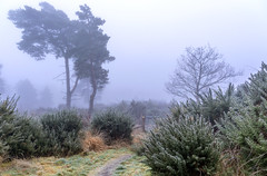 Frosty, Foggy Path (nicklucas2) Tags: fog frost weather cold winter path tree gate