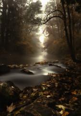 Mystic Morning in Erding / Stadtpark (drummerwinger) Tags: rot stadtpark erding bildbearbeitung canon700d sigma nebel dunst fog mystic wasser water bach