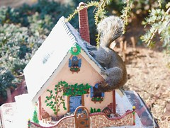 Hello....Anybody home? (ineedathis,The older I get the more fun I have....) Tags: storybookhome graysquirrel eating easterngraysquirrel sciuruscarolinensis treesquirrel garden 2016gingerbreadhouse snowman frontentrance atticeyewindow logs log splittier axe steppingstones fence stonefence window decor slate lightposts heart ivyclimber carrot stones eave roof royalicing buttons bricks coal gingerbreadhouse christmas christmastree snow flowers miniature sugarwork modeling baking nikond750 closeup ivy glitter fairytalecottage weepingatlascedar tree ornamentaltree pecans nuts outdoor frontgate gumpaste