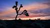 Joshua Tree National Park (Dave Fine) Tags: rock hike landscape desert nature nationalpark shadeoforange orange rocks night california silhouette colorful unitedstates outside joshuatree landscapephotography hiking tree outdoors park usa sky sunset dirt dusk twentyninepalms us