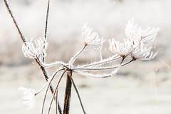 nice.....ice (aj.lindeboom) Tags: album macrocloseup landschappen najaarwinter