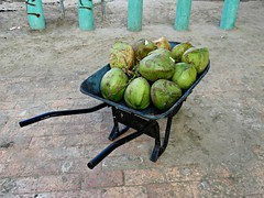 Coconuts (knightbefore_99) Tags: fresh coconut tasty juice best beach playa mexican food mexico rincon guayabitos green tropical fruit brouette wheelbarrow