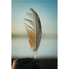 Feather (Shreyash Verma) Tags: 50mm feather nikon primelens d5300 dream dreamworld beautiful colors blue blur blurrybackground lightroom photoshop india