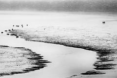Méandre... (Fabrice Denis Photography) Tags: nouvelleaquitaine france charentemaritime bwphotography blackandwhite blackwhitephotos brouillard monochrome lesboucholeurs maréebasse blackandwhitephotography monochromephotography brume châtelaillonplage fr noiretblanc