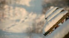 my winter (Beata Jakubas) Tags: beatajakubas jakubas landscape poland view nikon silesia