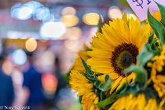 Sunflower (Tony Scuvotti) Tags: canada flower broken vancouver nikon market sunflower granvilleisland 50mm18 niftyfifty nikond750