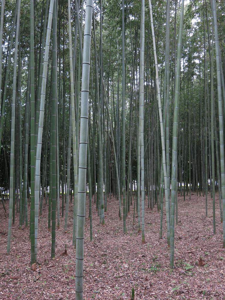 The World S Best Photos Of Arashiyama And Bambuswald Flickr Hive Mind