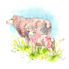 Candyfloss Sheep Mummy and Lamb (Amy Holliday) Tags: uk pink art illustration artist sheep watercolour childrens illustrator childrensbookillustration