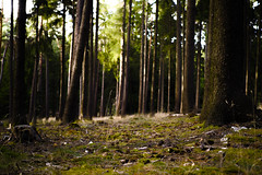 the sound of the trees (tommy1905195) Tags: trees light green nature forest moss hill sigma taunus merrill foveon dp2m