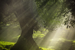 Benedizione (Galep Iccar) Tags: tree natur natura albero luce light green