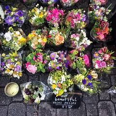 Christmas Eve flowers at Salamanca