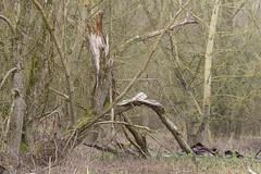 20170104-_IMG1042-Edit (fleetingphotons) Tags: pentaxk1 smcpentaxa200mmf28ed wasingestate fishing warrenbeat kennet trees