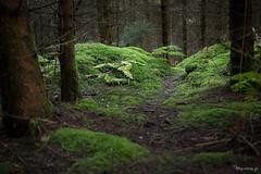 Passage (Zampaï) Tags: arbres auvergne chemin combrailles forêt france mousse nature puydedôme sousbois