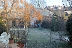 2017_Január_6463 (emzepe) Tags: 2017 január tél hódmezővásárhely bercsényi utca 37 otthon nálunk kert kertben udvar udvaron zúzmara frost cold winter garden garten yard backyard tree fa szivarfa fenyő tuja tuya pine bush bokor