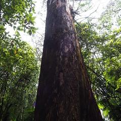 Otway Ranges National Park