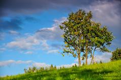 Lonely tree (Grzesiek.) Tags: lonely solitary tree drzewo lato summer sky cloud chmury niebo
