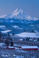 Winter Orchards (David M. Cobb) Tags: orchard orchards winter snow mounthood mthood or oregon volcano vulcan cascaderange agriculture