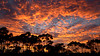 Cloud Show (PAF71) Tags: clouds sunset geelong sky trees spectacular wow brilliant