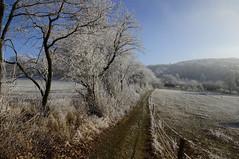 Winter Neunkirchener Höhe (dominidomk) Tags: winter feldweg landschaft nature natur schnee snow reif raureif kälte kalt coldness cold sun shining