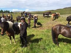 IMG-20160705-WA0051 (neeltjevanderweide) Tags: iceland horse ishestar goldencircle horsebackriding icelandichorse 2016