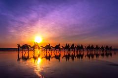 The Last Camel Train (jenni 101) Tags: sunset cameltrain camels australia westernaustralia cablebeach